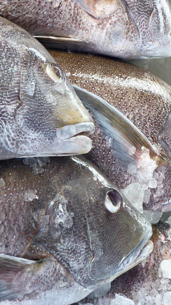 fish unfortunately dead